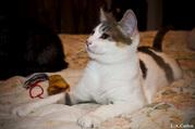 Взгляните! В дар очень красивые котята!
