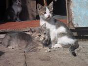 Подарю красивых котят