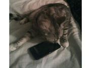 Срочно!!! Продам телефон Samsung Galaxy SII.