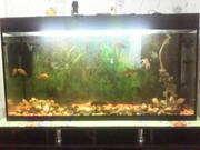Аквариум с рыбками продам