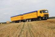 Грузоперевозка зерна,  услуги самосвалов,  зерновозов