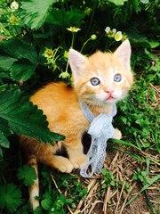 Милый котёнок мальчик